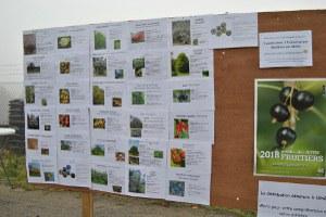 Distribution des plants d'arbres 2018